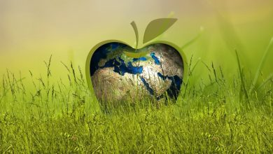 Photo of 5 Telltale Signs of a Genuine Eco-Friendly Business/Brand