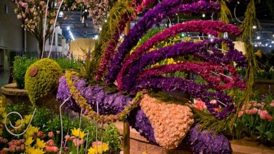 Photo of Flower Shows in India That You Can't Miss