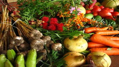 Photo of 4 Commonly Sought After Types Of Organic Food in NZ