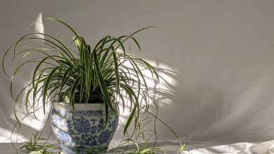 Photo of Go Greener: The Best Indoor Plants to Grow at Home
