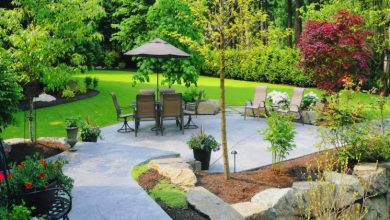Photo of Low-cost ways to rescue your yard before summer