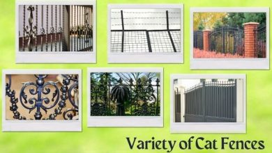 Photo of Know The Benefit and Variety of Cat Fences
