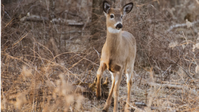 Photo of Best Deer Hunting Tips Alabama for Hunters