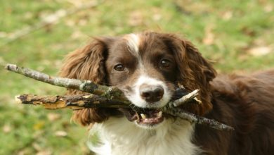 Photo of THINGS YOU MUST KNOW BEFORE TRAPPING A DOG