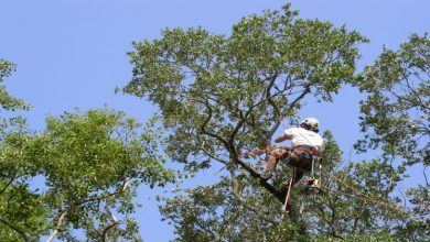 Photo of Is Tree Care Service Affordable?