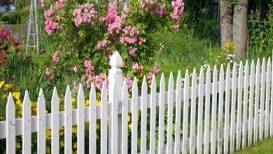Photo of The Best Cat Fence For Your Home