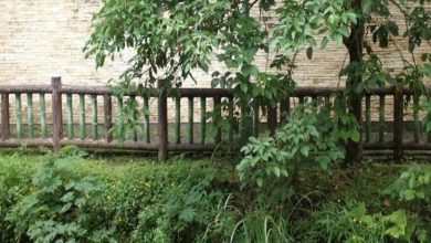 Photo of How To Choose The Best Cat Fencing For Your House