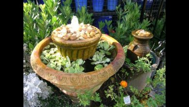 Photo of How to make your own water garden