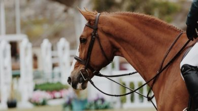Photo of Life After Racing – What Do Racehorses Do When They Retire?