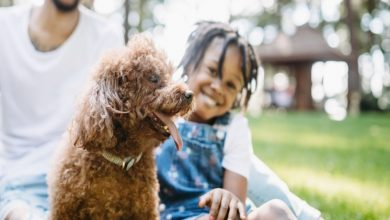 Photo of Dog: Tips to Be a Good Owner
