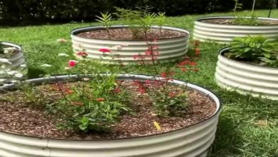 Photo of The Advantages of Using a Raised Garden Bed