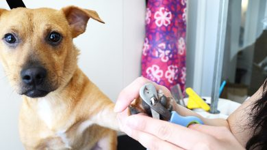 Photo of The Importance of Proper Grooming of Dogs and Pet Care