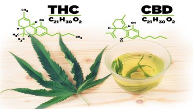 Photo of Difference between CBD & THC
