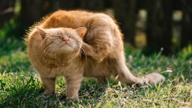 Photo of Get Rid of Your Cat's Fleas and Prevent Heartworms