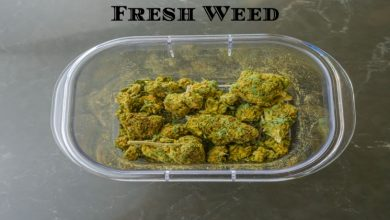 Photo of Top 7 Ways to Keep your Weed Fresh and Potent
