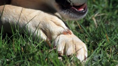 Photo of Clippers vs. Grinders: What's the best way to shorten your dog's nails?