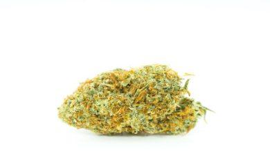 Photo of Amnesia haze strain – Best ever strain for anxiety treatment